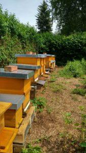 Bienenvölker im Garten